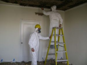 mold damage repair roswell